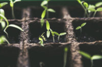 Scientists Gave Their Lives Protecting Seeds